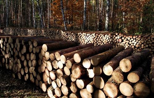 productive-wood